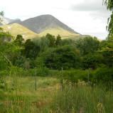 Large Greyton plot for sale with established plum orchard – Ref: UTPP