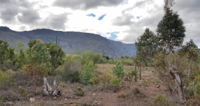 Affordable Greyton plot for sale – Ref: MPSL